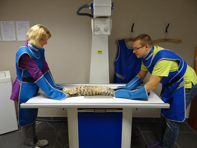 clinique v 233 t 233 rinaire des vallons la tour du pin radiologie radiographie 233 chographie